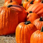 Fall Festivals in Northern Virginia