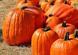 fall festivals nova